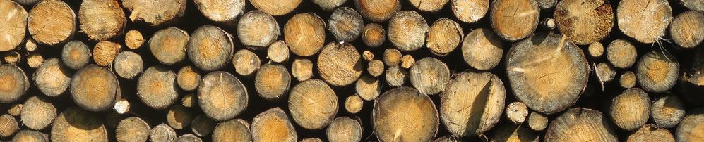Nachhaltiges Spielzeug aus Holz